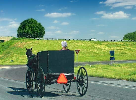 Amish woman in buggy
