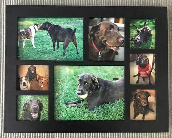 gentle goodbye and dog photo collage