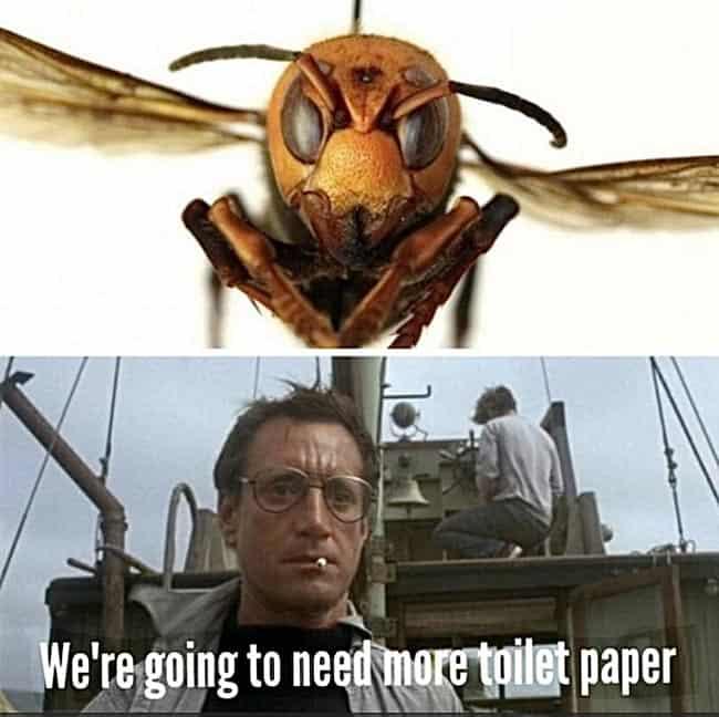 2020 memes and memories of the pandemic