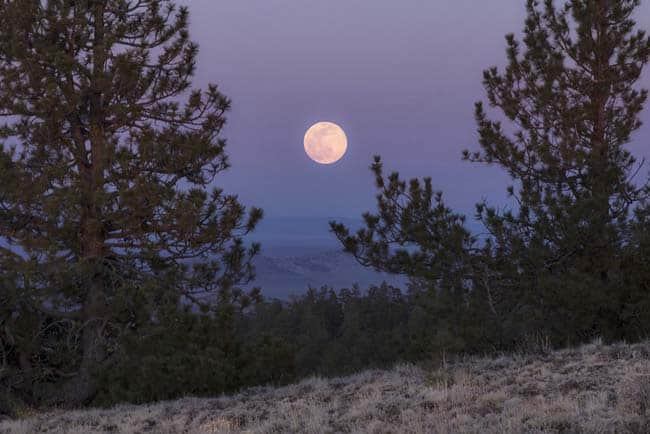 Pink Moon and memories of the pandemic